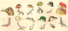 Birds - heads and feet / Cabeas e patas de aves (CGoulao) Tags: old school bird portugal animal illustration vintage image estudo head picture ave atlas antiga escola bec animaux portuguese ilustrao desenho oiseaux planche imagem bico ancienne antigo pata studie zoology estudar gravura 1907 zoologia trait gravure zoologie balthazarsantos mattososantos
