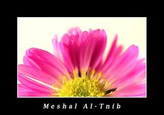 flowers (Meshal Al-Tnib) Tags: flowers art canon photo kuwait      kuwaitphoto meshal meshaal   altnib kuwaitart