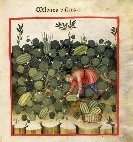 020- Los melones dulces-TACUINUM SANITATIS- Biblioteca Casanetense Ms. 4182