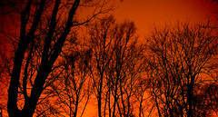 the roots in fire (Daniel*1977) Tags: wood city trees red sky urban blackandwhite bw orange white plant black me monochrome face night clouds forest plane work dark myself fire town photo walks flickr pattern geometry district daniel captured january picture roots shapes samsung poland surface neighborhood burn figure area warsaw civic around form did shape citizen 2009 section province configuration environs municipal proximity acreage precinct mokotow vicinity urbanspace pro815 samsungpro815 superficies figuration kuliski urbanshapes didmyself gettypoland1 gettycentraleurope