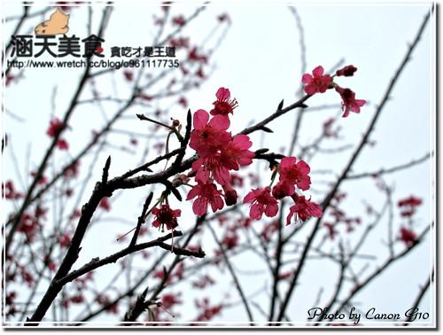 你拍攝的 IMG_0229。