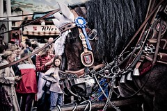 Germany 2008 (Quique Bloody) Tags: horse germany caballo oktoberfest landsbergamlech