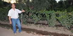 Un paseo entre viñas orgánicas y originales tragos con vino