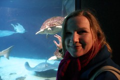 el tortuga pasa (Genista) Tags: blue red smile coneyisland aquarium shark stingray turtle caroline wideangle