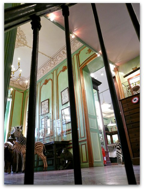 Fabuleux Deyrolle – a cabinet of curiosities in Saint-Germain - Hotels  UA16
