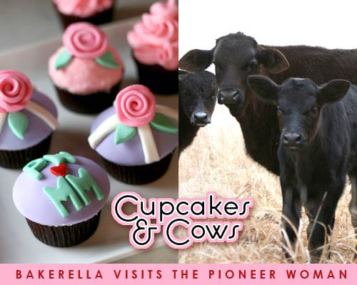 Cupcakes & Cows