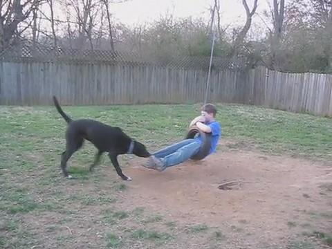 Dog Swings Boy