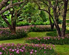 ~ Pink Flower Field ~