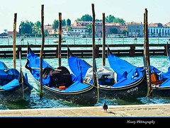 Gondolas' parking (Houry Photography -on/off) Tags: venice friends italy canon photography romance mediterraneansea gondolas houry thesuperbmasterpiece