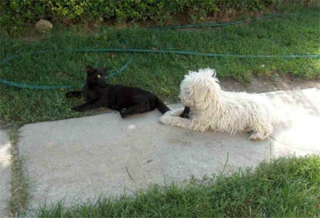 cats&dogs_09