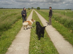 Treffen (manopet) Tags: dog collie hund mano meldorf torja