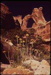 Narrow - Leaf Yacca and Angel Arch, 05/1972