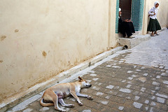 Sleeping dog - Fez, Morocco (Maciej Dakowicz) Tags: africa dog girl animal yellow wall morocco fez maroc maghreb medina souq fes