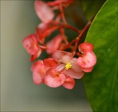 Tiny orange flower