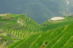 China 3 073 (Flaneur Harris) Tags: china guanxi longji