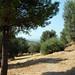 Athens 07 05 09_1122