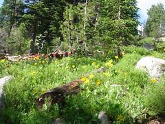 DSC04862 (jaydude_72) Tags: mountains yellowstone beartooth