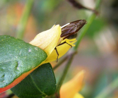 avispa en flor