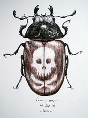 Lucanus atropos (gnommi) Tags: skull drawing originalartwork beetle naturalhistory fantasy imaginary bizarre inks entomology bestiary coleoptera watercolourpencil lucanidae lucanus insectillustration unnaturalhistory