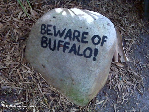 Beware of buffalo!