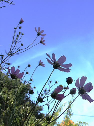 Flower-054