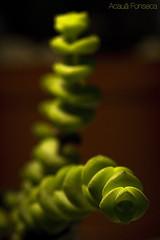 seres vegetais (Acau Fonseca) Tags: cactus macro plantas canon100mmf28macro detalhes macrofotografia