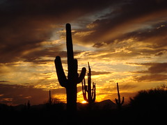 how sweet it is (azhiker_grrl) Tags: sunset arizona sky silhouette yellow night landscape gold desert tucson dusk saguaro sahuaro naturesfinest pimacounty mywinners