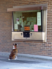 Waiting for the bank to open (Maeggie) Tags: dog pets dogs funny humor banks smalltown bankdrivethru memphismissouri