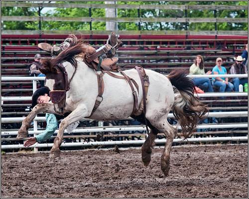 Saddle bronc ____4057 (by Silver Image)