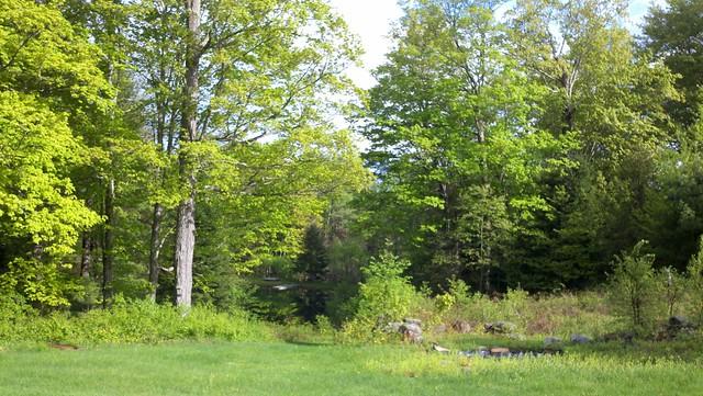 Cabin May 2011-1