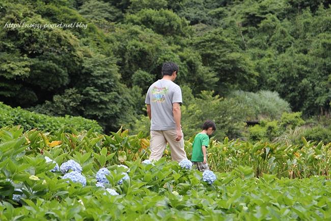 20110612_YangMingMtFlowe_0171 f