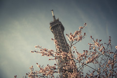 (Nearly) Spring In Paris (Gilderic Photography) Tags: city trip travel light sun paris france tree tower monument fleur architecture canon eos soleil spring europe raw tour lumire happiness eiffel bloom arbre printemps ville blooming 500d gilderic
