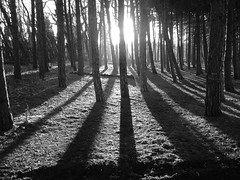 Sun Through The Trees (adebnd) Tags: trees shadow bw sunlight white black forest liverpool lumix woods northwest panasonic formby fz28 persbest1
