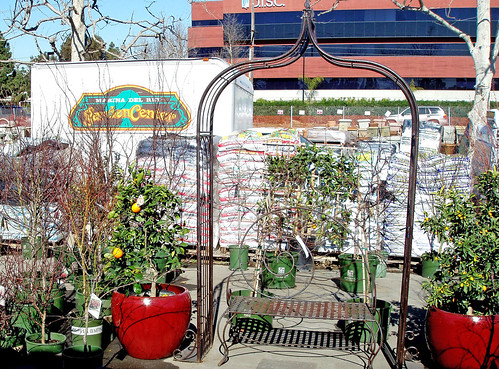 Japanese Mazploes and Citrus Trees with metal arbor and bench