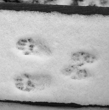 SquirrelTracks6