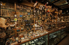 Wide Angle Wunderkammer by caruba, on Flickr