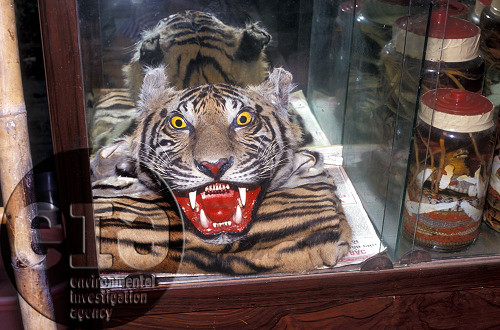 TIGERS: skin for sale