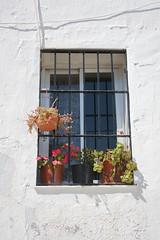 Summer's window