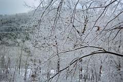 Across the valley (junebug_1944) Tags: icestorm eurekaspringsar january2009