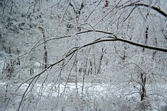 Hillside Avenue Below (junebug_1944) Tags: icestorm eurekaspringsar january2009