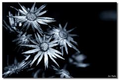 Naturaleza muerta (Jos Andrs Torregrosa) Tags: naturaleza flor canon100mm