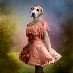 first ball (Martine Roch) Tags: portrait dog pet cute love animal lady vintage labrador antique surreal photomontage elegant boudi handcoloured digitalcollage lamarelle petitechose martineroch