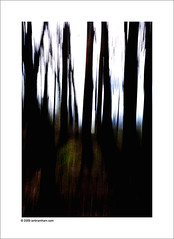 Running in the Woods (Ian Bramham) Tags: trees abstract blur landscape photography photo woods nikon fineart running d40 ianbramham