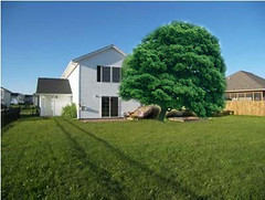 House hits tree.