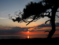 Old tree by the sea (Ingrid0804) Tags: sunset sea sky tree beach clouds oldtree addictedtoflickr anawesomeshot impressedbeauty 100commentgroup vosplusbellesphotos virtualjourney virtualjourneygallery