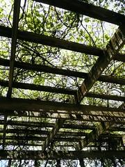 Winfield, IL, Cantigny, Grape Arbor (Mary Warren (6.8+ Million Views)) Tags: wood plants nature leaves lines foliage arbor grape cantignypark wheatonil