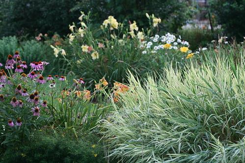 ribbon grass