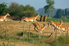 Jumping towards freedom (vic_206) Tags: naturaleza nature animal canon jump bokeh awesome catalonia animales salto catalunya actionshot emporda nioce sigma150500 aiguamollsdel´emporda