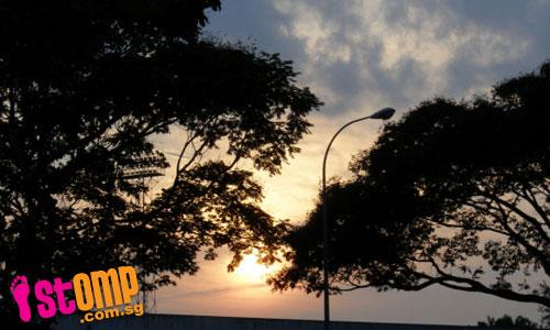 Appreciating nature relieves stress, says STOMPer