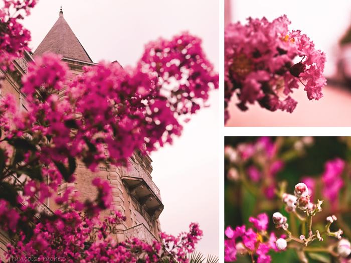 De flores, de rosa y de techos...